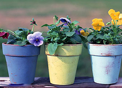 花卉养殖需要注意哪些误区 别再将花养死了