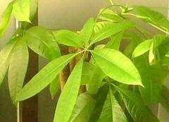 室内不宜摆放的植物有哪些?快看你中招了没有
