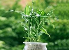 花友找了很久的耐阴植物,这些就足够了!
