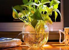 办公室盆栽植物养殖方法及注意事项