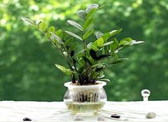 有钱人喜欢养的盆栽植物,招财还养人