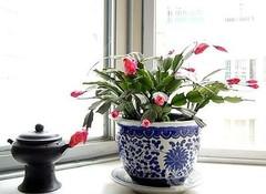 自来水对家庭花卉养殖的影响,爱花人士必学
