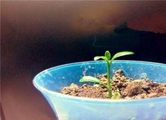 如何防止盆栽植物土壤板结?花友们赶紧学起来