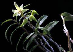 能治病的药用植物盆栽推荐,实用又健康