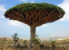 自然界的神奇植物,大开眼界!