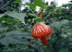 自然界的奇异珍稀植物,你一定没见过!