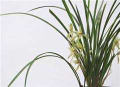 夏季兰花怎么养殖好 该注意哪些呢