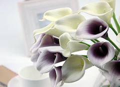 家居中如何摆放马蹄莲 为家居带来舒适装饰