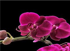 蝴蝶兰开花后怎么养护好的方法有哪些呢