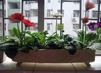 儿童房可以摆放哪些植物 植物选择呵护孩子健康