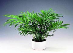 哪些植物能够净化空气 你养了几种