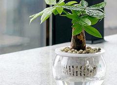 掌握这几点技巧 让家中水培植物安心过冬