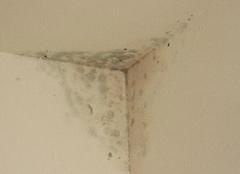 泥瓦师傅教你解决墙壁发霉问题的方法