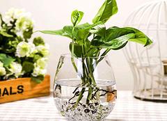 为家居选购一款花瓶 让花饰装扮你的生活