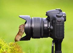相机拍照糊脸的原因有哪些 摄影师怎么避免的