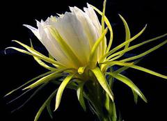 养殖花卉出现发黄是为什么 对症下药才是关键