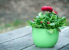 在家中养殖花卉有哪些技巧 为你带来清新家居生活