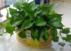 适合放在室内的植物有哪些 净化空气就靠它们了