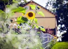 哪些绿色植物有土壤修复能力 绿化环境少不了它们