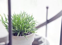 除甲醛植物盘点 让家居更清新