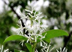 哪些植物开得花好看 名字奇怪花却很美