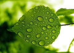养殖绿色植物有什么好处 你真养对了