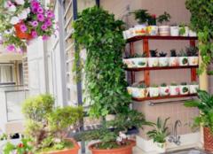 阳台上的植物要怎么管理 速速收藏