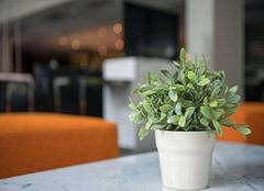 新房装修摆放什么植物好 缓解室内空气质量
