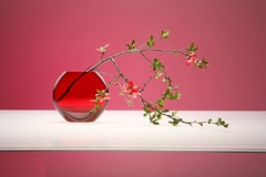 插花花瓶怎么选择好 惊艳花瓶推荐