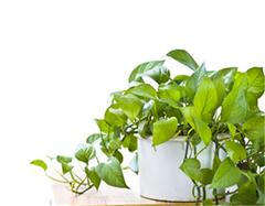 化解卫生间不良风水的植物 巧用植物去浊气