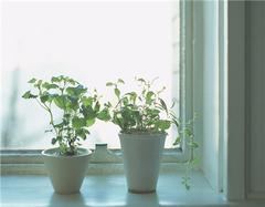 厨房化煞植物有哪些 如何利用植物改善厨房风水
