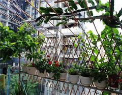 阳台小菜园的布置方法有哪些 在家吃到绿色的果蔬