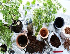 新房异味就靠绿植 这些绿植一定要养殖