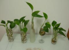 绿色植物主要有哪些作用 让你的生活更健康