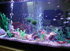 鱼缸水族箱的材质都有哪些 给鱼儿一个有保障的家