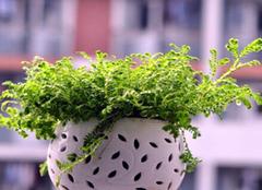 盆栽植物叶子变黄有哪些处理方法 可能有病菌了