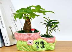 净化空气的植物都有哪些呢 主要靠它们