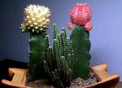 防辐射植物都有哪些 这三种就够了