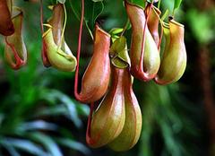 哪些植物具有驱蚊虫的作用 赶紧用起来