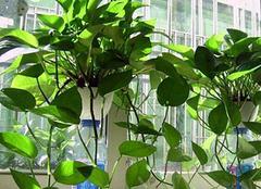 哪些植物可以净化空气呢 让空气持久清新