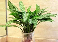 居室中适合摆什么植物 由窗户朝向来定