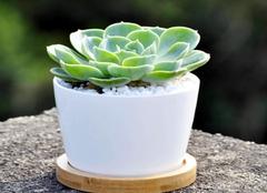 扦插简单易成活的植物有哪些   自己也能做
