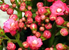 适合秋冬季养殖的植物有哪些 美翻天了