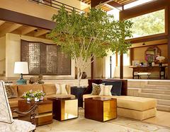 家居植物增添生命力 添置室内绿植首要考量的因素是什么