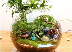 多肉植物怎么水培 要注意哪些呢