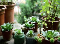 净化空气的盆栽植物有哪些  净化能力超强