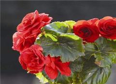 立秋后花卉养殖应该注意哪些 常见的方法有哪些