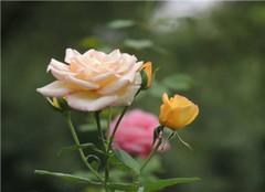  秋季花卉要怎么养护 有哪些方法呢