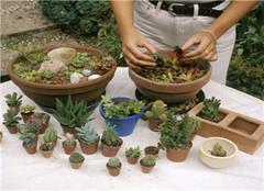 多肉植物栽培容器怎么选 有哪些方法呢