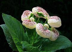 冬天家里适合养什么花 献给爱养花的你